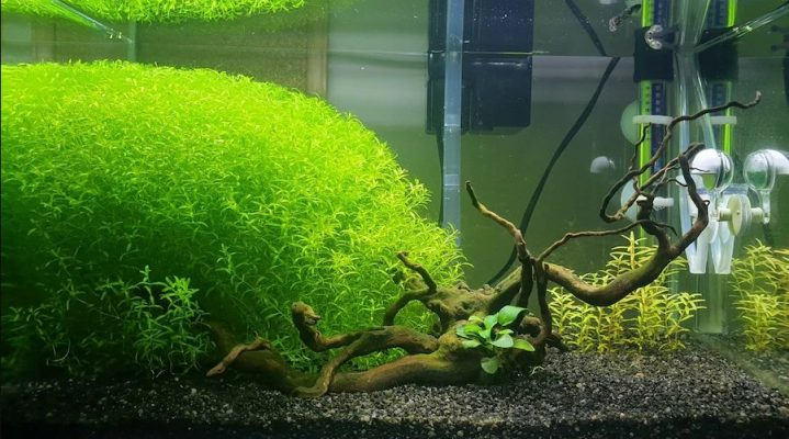 Micra bitkisi