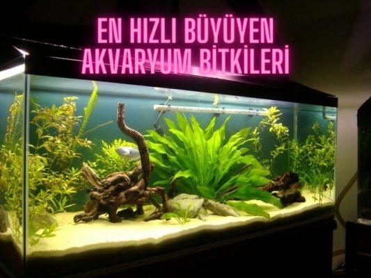 en hızlı büyüyen akvaryum bitkileri